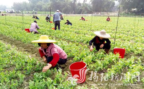 东莞茶山镇助力揭西甲埔村打造果蔬供应链